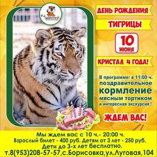 День рождения тигрицы Кристал
