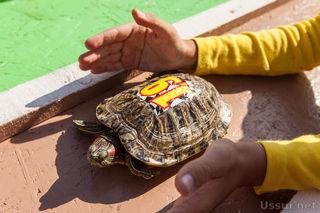 Вторые черепашьи бега прошли в зоопарке «Чудесный»