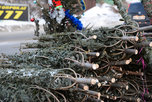 Новогоднюю елку можно купить в любой точке Приморья