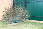 В мини-зоопарке с. Борисовка пополнение