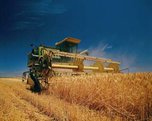 Уборка ранних зерновых заканчивается в Уссурийском городском округе