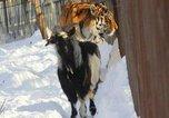 Приморский сафари-парк вошел в 12 лучших зоопарков мира