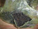 Уссурийская таможня задержала более 26 кг сушеного трепанга
