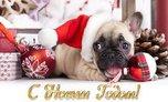 Ussur.net желает всем счастливого Нового года и Рождества!