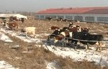 Господдержку получила еще одна ферма в Уссурийском городском округе