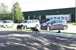 В Уссурийске организовани отлдов бездомных животных