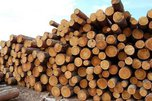 В Приморье пытались ввезти крупную партию леса из Амурской области без карантинных сертификатов
