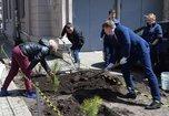Более 1500 саженцев деревьев высадили в Уссурийске во время общегородского субботника