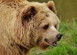 Тонувших в Уссурийске медведей снова нужно спасать