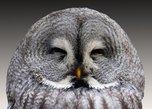 «Муж, я тобой горжусь»: в Приморье спасли сову