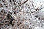 Синоптики заговорили о повторении ледяного дождя в Приморье