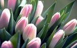 За незаконную торговлю цветами грозит штраф