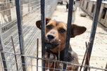 Полсотни бродячих собак отловили в Уссурийске с начала года