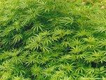 Полиция уничтожила 246 тонн наркосодержащих растений в Приморье в ходе спецоперации