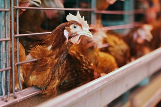 «Птицефабрика Уссурийская» поддерживает местных производителей в Приморье
