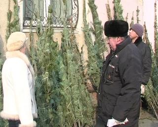 Самовольно срубленная новогодняя красавица обернётся штрафом от 3,5 тыс. рублей