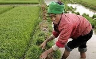 Китайцы бегут из сельхозпредприятий Приморья, не выдерживая рабских условий труда