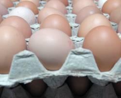 В Приморье стало на треть больше яиц