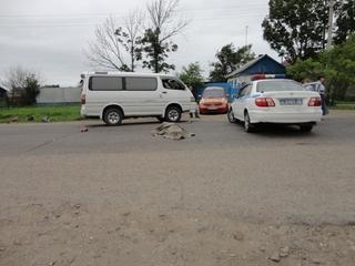 Мотоциклист сбил насмерть пенсионерку в с. Воздвиженка