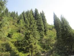 Декриминализация лесной отрасли ведется в Уссурийске