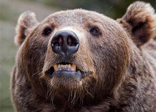 Медведь замечен в городской черте Уссурийска
