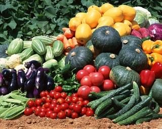 Уссурийские овощи отправятся на Сахалин, Камчатку и в Магадан