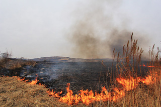 Поля в Уссурийске горят от стихийных поджогов сухостоя