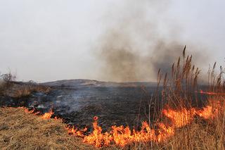 Особый противопожарный режим вводится в Уссурийском округе с 14 марта