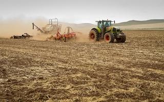 Поля в районе Уссурийска в этом году вместо морковки и капусты засеют зерновыми