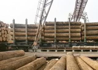 Продавцы лесоматериалов
