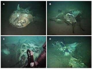 Исследователи нашли уникальное подводное кладбище морских гигантов