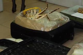 55 живых камчатских крабов задержали на Уссурийской таможне
