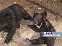 В ответе за тех, кого приручили. Как прокормить одиннадцать медведей на две пенсии?