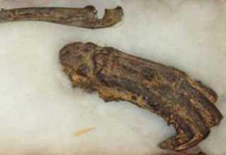 В Японии на всеобщее обозрение выставят кости водяного демона