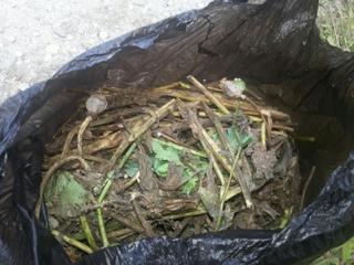 Полицейские изъяли у жителя Уссурийска пакет с маковой соломкой