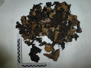 Уссурийские таможенники пресекли незаконный вывоз 100 кг редкого восточно-азиатского лишайника