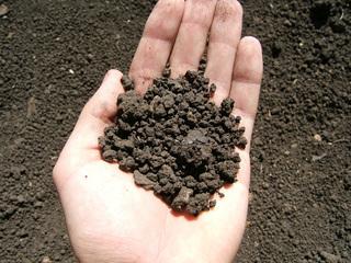 Прокуратура проверила земли сельхозназначения в Уссурийске