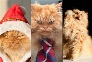 Новая звезда Гарфи, самый злой в мире кот
