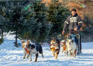 Любители ездового вида спорта соберутся в пригороде Уссурийска