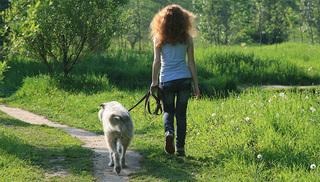 Уссурийцы могут сообщить о нарушениях правил выгула домашних животных