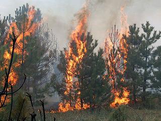 В Уссурийском городском округе ликвидирован лесной пожар