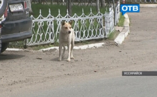 В Уссурийске начал работу закон по отлову беспризорных собак и котов