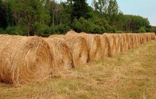 Заготовка кормов идет полным ходом в хозяйствах УГО