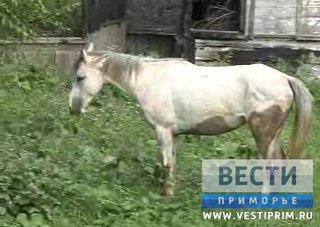 Жители сразу нескольких сел под Уссурийском страдают от нашествия неуправляемого стада лошадей