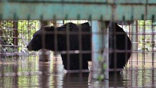 Спасатели вывезли последних трех медведей из зоопарка в Уссурийске