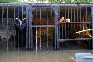 Ветеринарам не удалось спасти эвакуированную из частного зоопарка медведицу