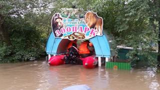 Кабаны из затопленного зоопарка в Уссурийске отказались от вольной жизни