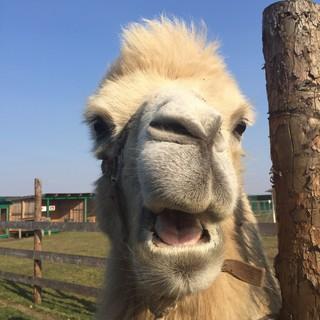 Гости зоопарка «Чудесный» теперь могут увидеть «Кхалиси».