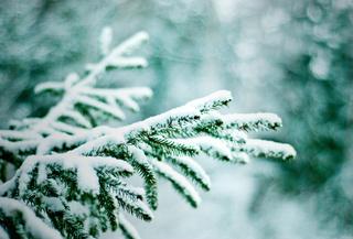 В четверг синоптики обещают снегопад в Уссурийске