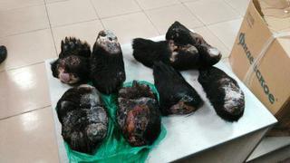 Уссурийские таможенники задержали лапы медведя